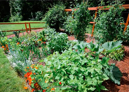 "A Great Resource for Beginning Gardeners – ""Food Grown Right, In Your Backyard"""